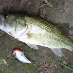 雄蛇ヶ池8/28減水40cm、バイブレーションで2本
