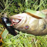 雄蛇ヶ池4/2バズジェットで47cm。水温11.5度、満水