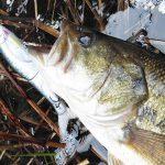 ジョインテッドクローのウエイトチューンは釣り場での微調整が欠かせない