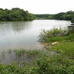 雄蛇ヶ池6/29の状況。今年は稚魚が異常に多い
