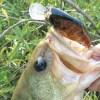 雄蛇ヶ池7/9デカクランクでグッドサイズ、ゴミ拾いご褒美フィッシュ。水質悪化進む