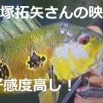 ピーコックバス全15種類、完全制覇への冒険~小塚拓矢