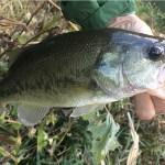 雄蛇ヶ池10/25若干減水しシャローは水質良化。オフセットイガジグスピンで2本