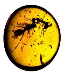 ancient-insect-battle-1-ant-termite