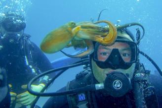 podvodni-mljet-6
