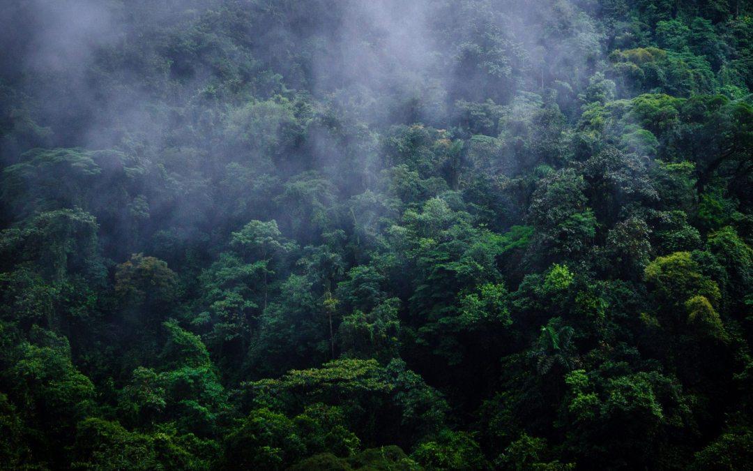 Parques Nacionales y Reservas Biológicas aportaron más de 3% del PIB en el 2016
