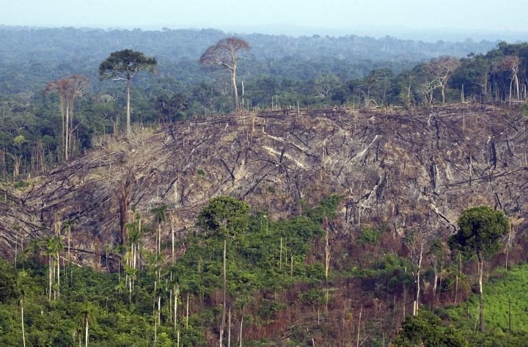 La selva más diversa del planeta está amenazada por la deforestación La mitad de las especies de árboles en el Amazonas corre peligro, según estudio