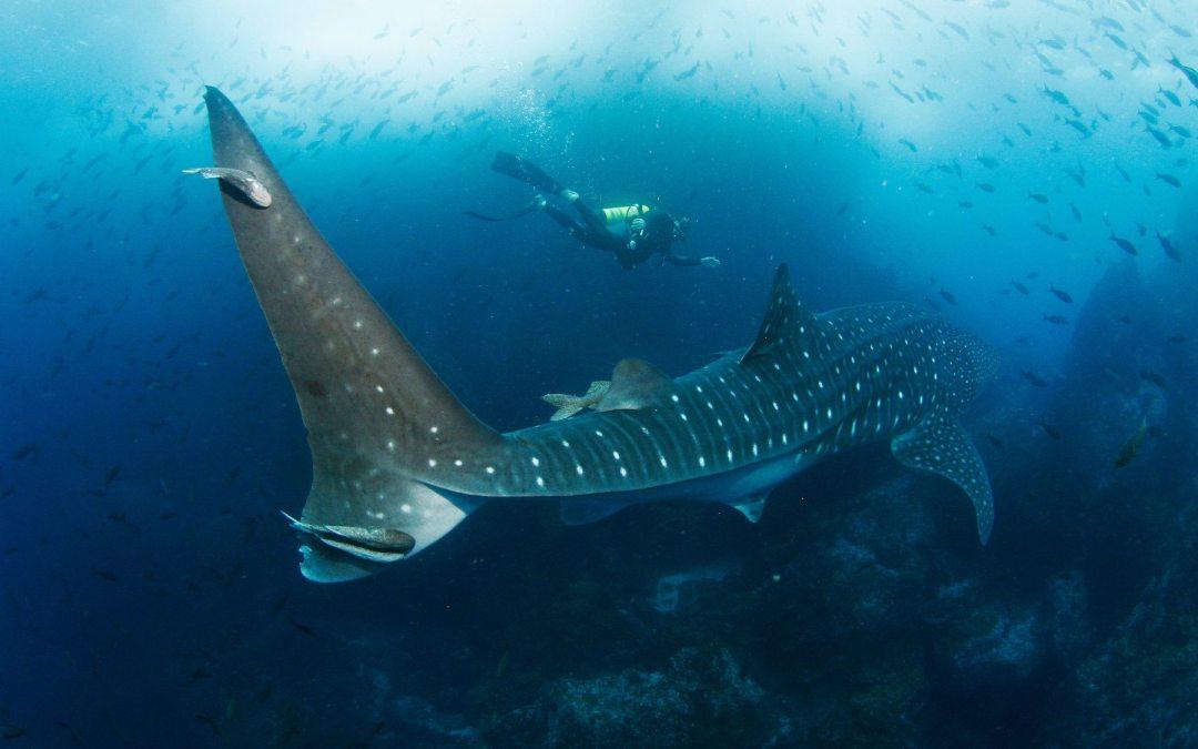 Científicos llaman a proteger los océanos para luchar contra el cambio climático