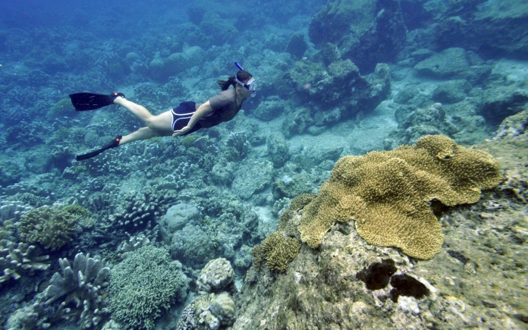 """El """"ABC"""" del blanqueamiento de los arrecifes de coral"""