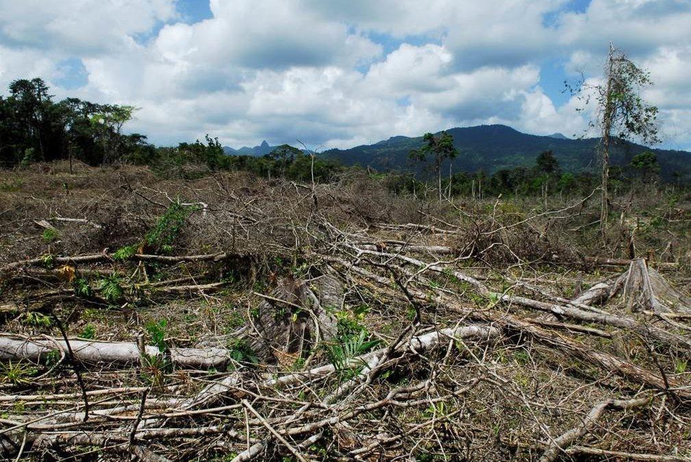 El tráfico de cocaína podría estar detrás de hasta 30% de la deforestación centroamericana