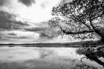 Cielo Nublado sobre el manglar, Sontecomapan, Veracruz.