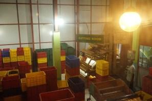 Tea factory 2