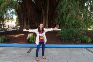 El Tule más grande del mundo/The biggest tree of its type