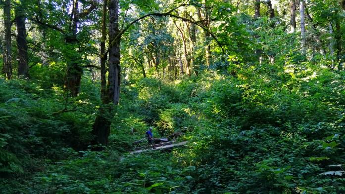 Sehr bewachsener Wald, fast dschungelähnlich in Washington