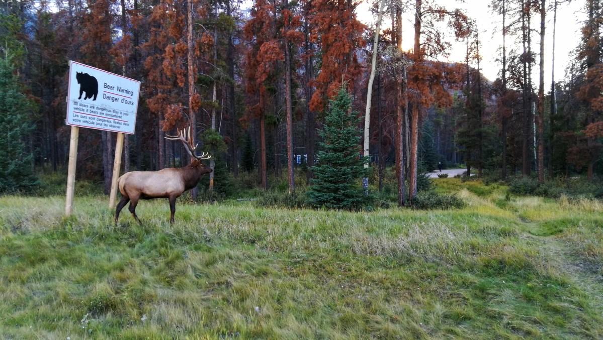 Ein Hirsch in freier Wildbahn