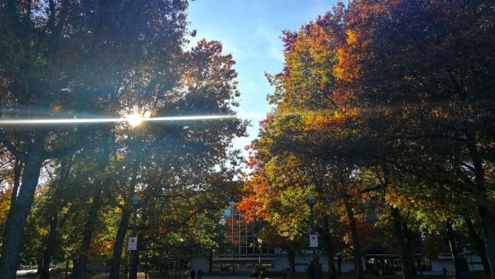 Indian Summer mit bunten Laubbäumen in Vancouver