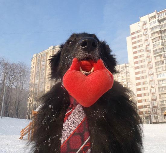 Valentines day funny