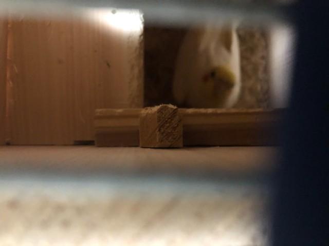 巣箱の中を覗く