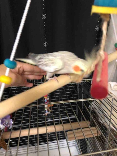 鳥のおもちゃ