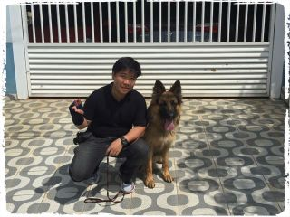 adestrador-de-pastor-alemao-cachorro
