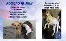 doação-cachorro-vira-lata