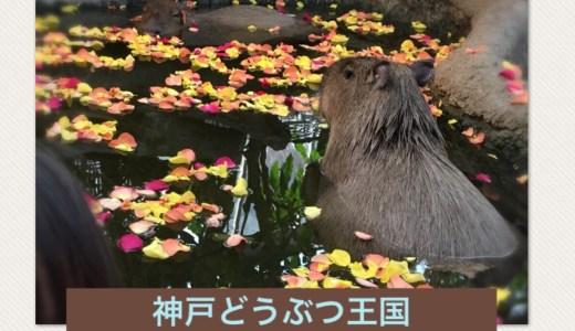 神戸どうぶつ王国はランチ持ち込みできる?園内のカフェ情報も!