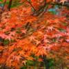 奈良の吉野の紅葉時期やライトアップ!! 地元がおすすめする見どころをご紹介!!