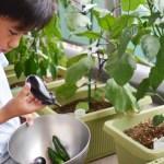 家庭菜園初心者へおすすめの野菜5選!! ベランダのプランターで簡単に始めよう