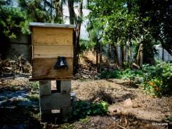 Organic Honey Caoba Farms Antigua Guatemala