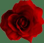rose_PNG655