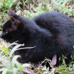 猫の日だし、みやま公園で猫を見てきたよ!