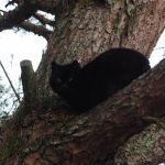 【みやまの猫】木の上に登ってる猫がいたよ!
