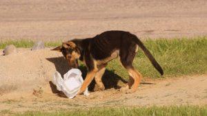 Perro y cubo de basura