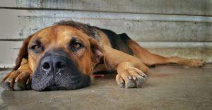 Tratamiento bronquitis en mascotas