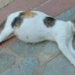 6 Cara tepat mengamati kucing yang hamil