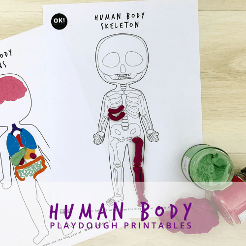 Free Kids Human body activity play dough STEM printable
