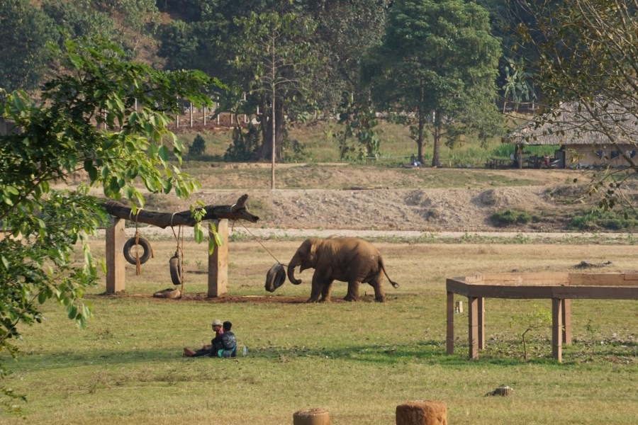 Watching elephants from the volunteer platform, playtime, Elephant Nature Park, Thailand