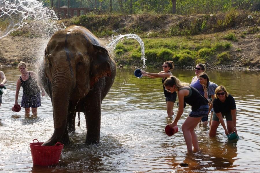 Elephant bathing, bath time, volunteering, Elephant Nature Park