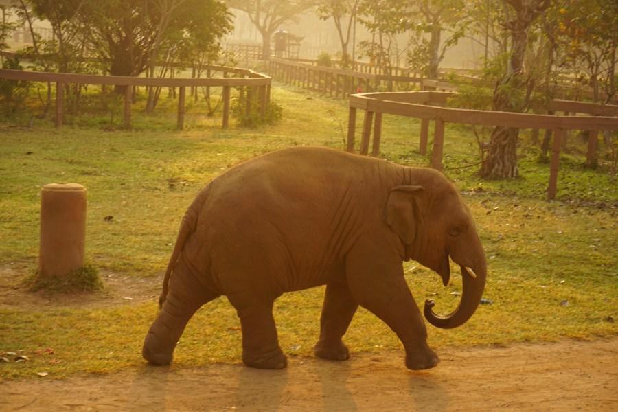 baby elephants. Elephant Nature Park, volunteering, responsible tourism, Thailand