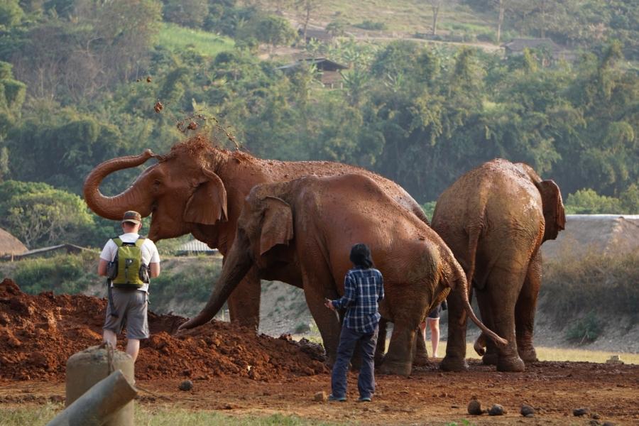 Elephant Nature Park, mud bath, Thailand, gentle giants