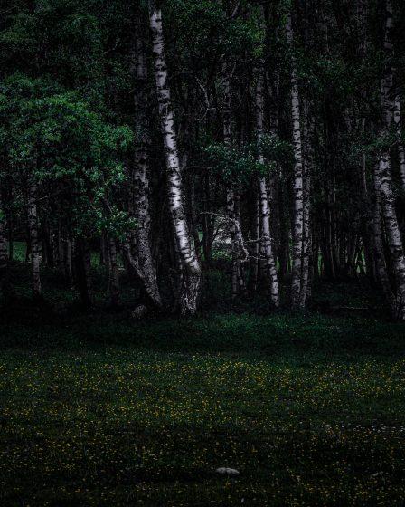 2020 birchwood scaled - Il était une (seconde) fois