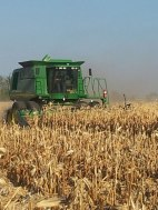 The Leonards combine harvesting Corn