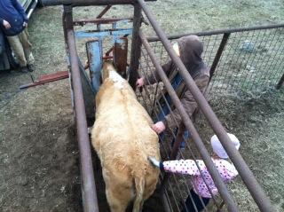 Anna petting a cow.