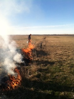 Burning the fence row.
