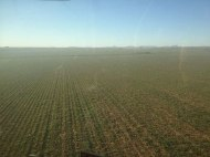 A view of a wheat field from the sprayer cab.