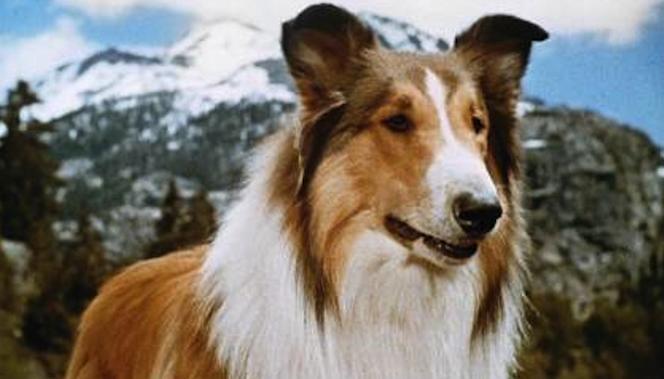 Coddingtons Corner: Ann Coulter — Lassie, Come Home