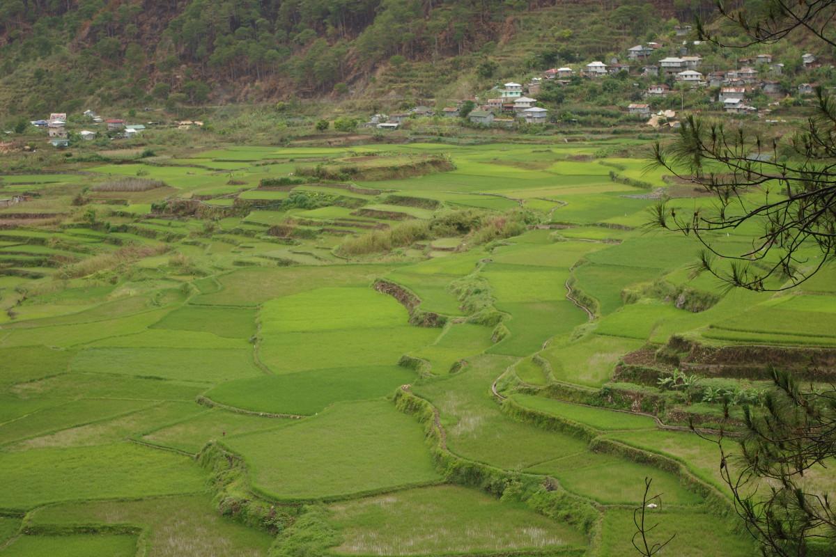 Sagada, tarasy ryżowe