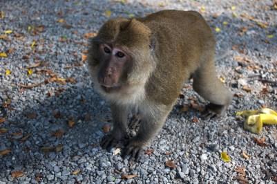 Zatoka Phang Nga małpy
