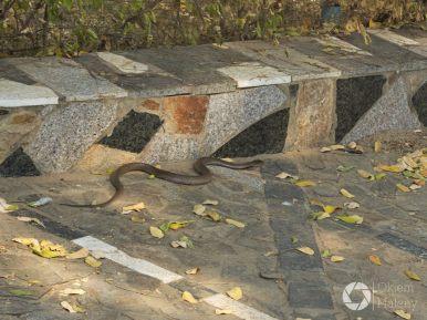 """rowerem przez Bagan, czasem drogę """"przebiegnie"""" wąż ;-)"""