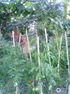 zbieranie fig